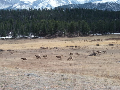 2014-04-19 Elk at Beaver Meadows