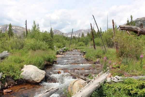 2015-08-02 Ouzel Creek