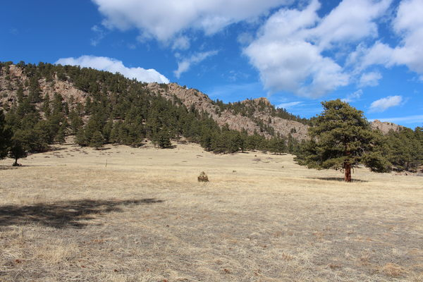 2021-01-22 Meadow, trees, mountain and sky at Button Rock Preserve